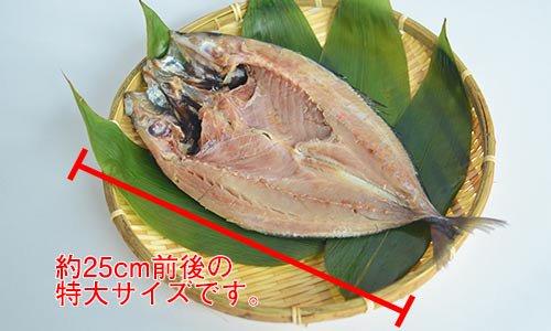 特大アジの無添加干物(伝承製法)