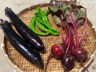 旬の野菜 おまかせ3種セット