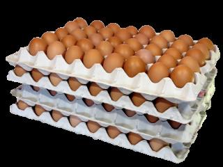 大地飼い自然卵 160個入り箱