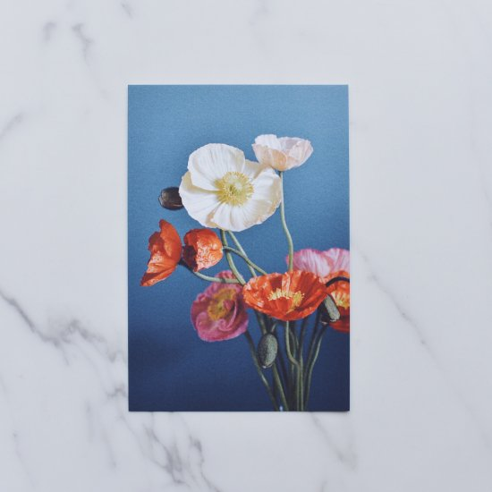 [OF PLANTS] POST CARD - Poppy