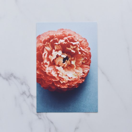 [OF PLANTS] POST CARD - Ranunculus