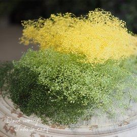 ソフトミニカスミ草