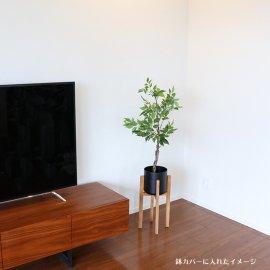 観葉植物ファイカスツリーポットミニ90cm