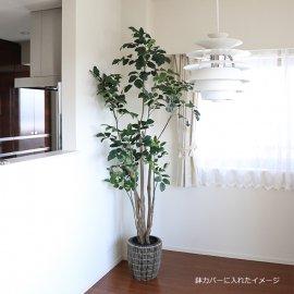 大型観葉植物ポリシャスポットL