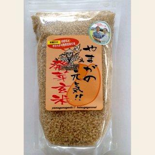 有機米使用 やまがの元気!発芽玄米(800g)