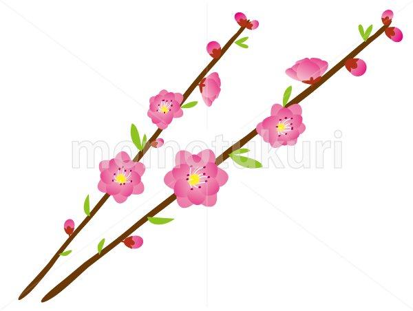 桃(もも)の花-2本