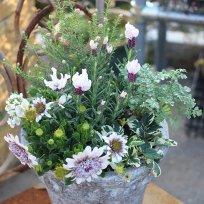 オリジナル春の寄せ植えセット ピンク系