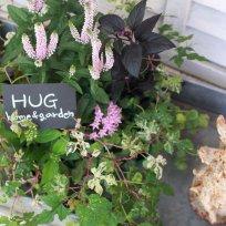 HUG* オリジナル garden寄せ植えset 『pink color』