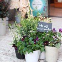HUG* オリジナル 秋のgarden寄せ植えset 『blue color』