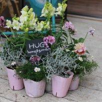 HUG* オリジナル garden寄せ植えset 『white&purple color』