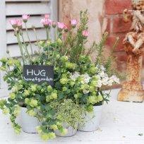 HUG 『春の寄せ植えset』