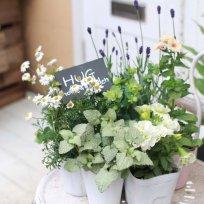 HUG garden 寄せ植え『white&green set』