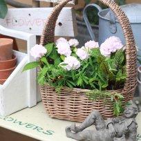 HUG garden 寄せ植え花苗『ヤマアジサイ set』かご付き