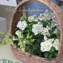 HUG garden 寄せ植え花苗『white  set』かご付き