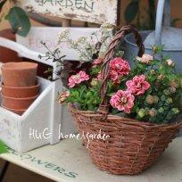 HUG garden 寄せ植え花苗『pink  set』かご付き