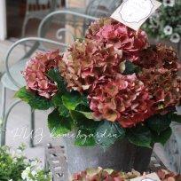 秋色品種 紫陽花『レッドパッション』