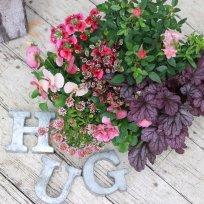 HUG home&garden 寄せ植え苗set『pink』
