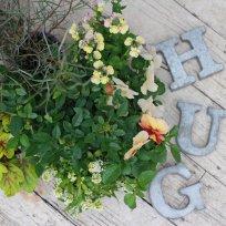 HUG home&garden 寄せ植え苗set『yellow』