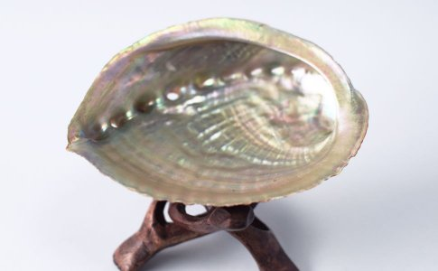 セージさざれ用の貝殻アバロンシェル中