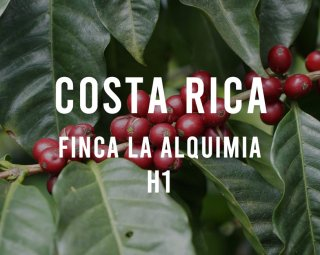 <img class='new_mark_img1' src='https://img.shop-pro.jp/img/new/icons14.gif' style='border:none;display:inline;margin:0px;padding:0px;width:auto;' />COSTA RICA FINCA LA ALQUIMIA H1