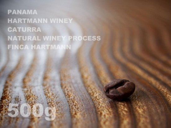 パナマ ハートマン ワイニー カトゥーラ ナチュラル・ワイニー・プロセス ハートマン農園 【500g】