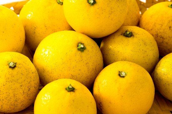 【数量限定】伊豆のニューサマーオレンジ(5kg)