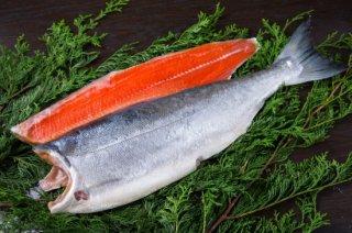 【ロシア産】特大塩紅鮭1尾切身(2.5kg)箱詰め