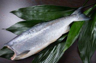 【ロシア産】 塩紅鮭1尾姿(約2.5kg)箱詰め