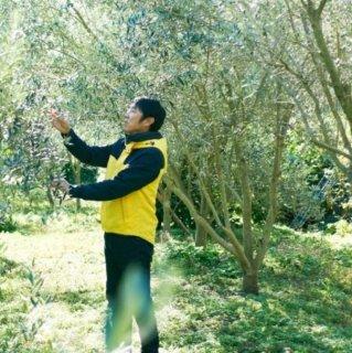 小豆島産有機オリーブの植木