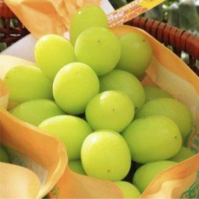 期間限定・数量限定・予約商品<br/>北信州 長野市<br/>TamaFarm(タマファーム)<br/>シャインマスカット<br/>上品な甘味と高貴な香りの朝採りをお届け<br/>