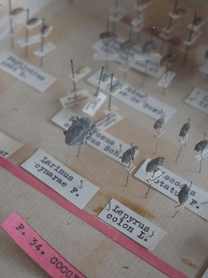 アンティーク 昆虫の標本(ガラスケース付)