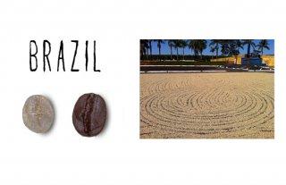 Cup of progressive Cerrad  第1位入賞 ブラジル ボンジャルディン農園/200g