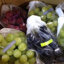 葡萄詰め合わせ 約2kg