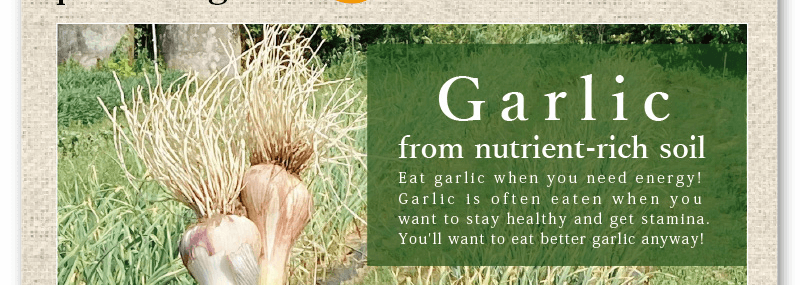 garlic from nutrient-rich soil