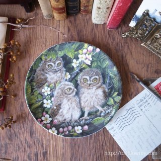 女神アテナの作戦参謀 / Vintage Wedgewood The Baby Owls Plate