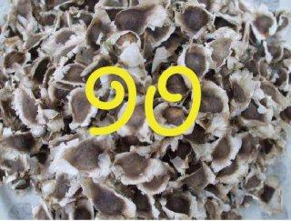 モリンガネシアンの種 90粒