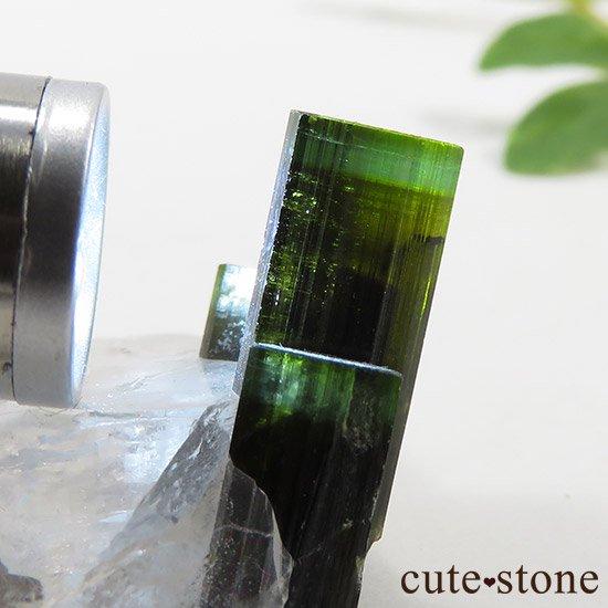 パキスタン産 グリーンキャップトルマリン 10gの写真3 cute stone