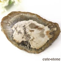 ペトリファイドウッド(珪化木)のスライス 329gの画像