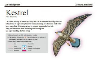 Life size Paper craft Kestrel English edition