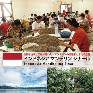 インドネシア マンデリン シナール(200g)