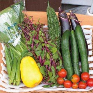【お野菜 約8種類】 一人暮らし・おまかせセット