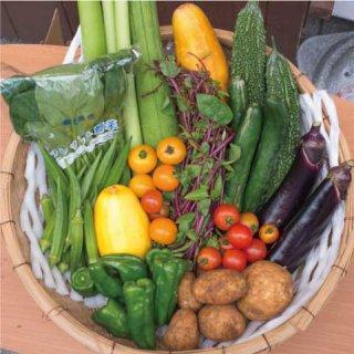 【お野菜 約13種類】 ファミリー向け・おまかせセット