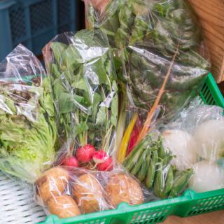 【お野菜約6種類】春夏の野菜サラダセット