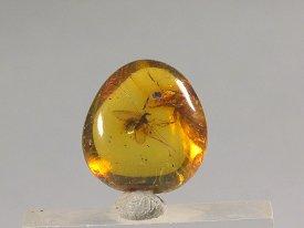 Amber:虫入り琥珀(バルト海産)