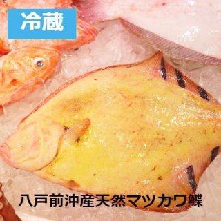 [冷蔵]【一匹限定】八戸前沖天然マツカワカレイ1.6kg