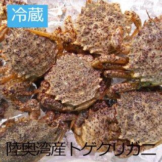 (冷蔵)トゲクリガニ 【メス】約1kg(4〜7ハイ)(生/ボイル)【数量限定】