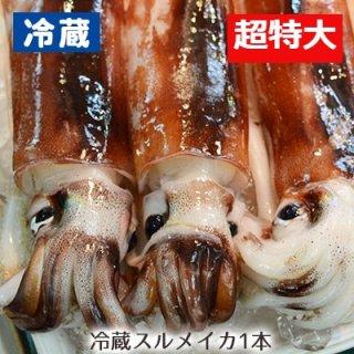 【冷蔵】八戸沖産するめイカ超特大 (1杯)※10ハイまで1梱包