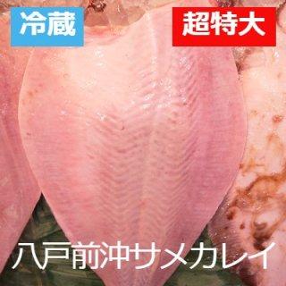 [冷蔵]【数量限定】八戸前沖天然サメカレイ1枚八戸産 2kg超特大サイズ