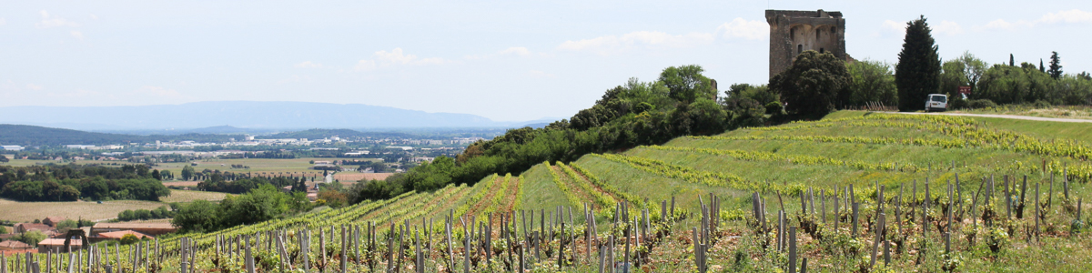 aVin -アヴァン- 南仏ワインの輸入、販売 ローヌ&プロヴァンス Rhone&Provence