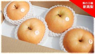 美味しい梨 「新高梨」(にいたかなし) 1個あたり1000g〜 4個セット